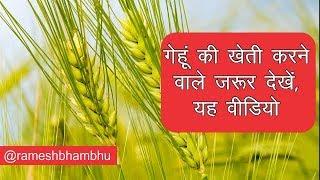 गेहूं की खेती करने वाले किसान इस वीडियो को जरूर देखें | How to advance cultivation of wheat 2017