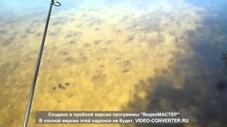 Сазан река Воронеж (плотина) 29.04.2013.