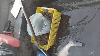 Ловля рыбы тяговой сетью начало