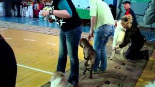 Кубок Фортуны выставка собак Темиртау http://zoofortuna.kz/
