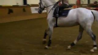 unbelievable!!!! You have to see this!!! by www.premiumhorses.de