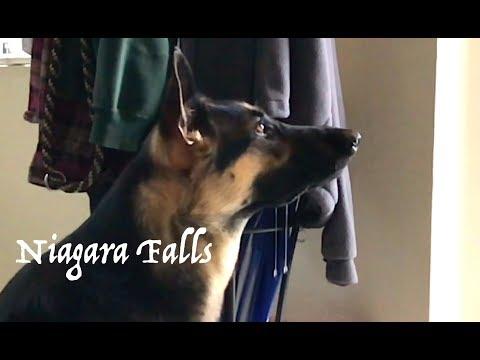 PLS READ DESC: Pavlov's Dog? Dog Drools when I have the door open