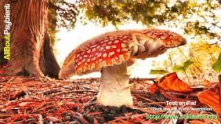 Androcell - Fungus Garden