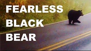 Bear Runs Across Traffic in Shenandoah National Park - Maps Included!