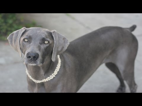 25 Smartest Dog Breeds Ever