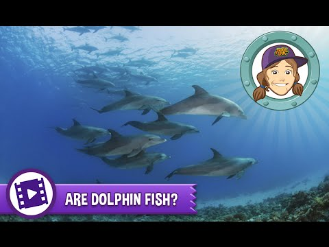 Animal Jam - Ask Tierney: Are Dolphins Fish?