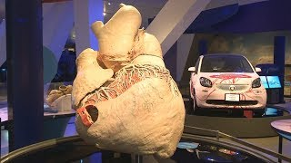 Самое большое сердце выставили в музее Торонто (новости)
