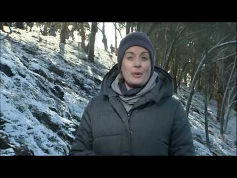ABC News Canberra - Snow in Canberra (13/7/2016)