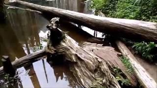 南投-竹山 / 忘憂森林 / 上下山接駁車與美麗森林實景
