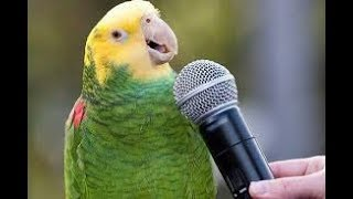 Приколы про попугаев!Попугаи прикольно танцуют, поют, разговаривают