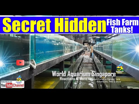 Secret Hidden Biggest Aquarium Fish Farm Shop Thousands Of Tanks & Fishes In Hidden Fish Chambers