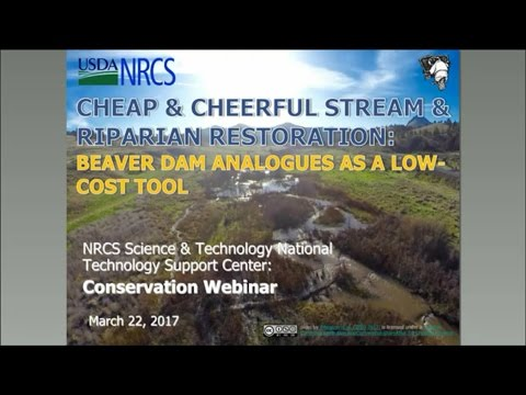 Cheap and Cheerful Stream and Riparian Restoration | Beaver Dam Analogues As Low-Cost Tool