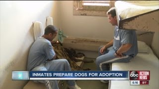 Prisoners Serving Years, Even Life, Passing Time By Training Rescued Dogs