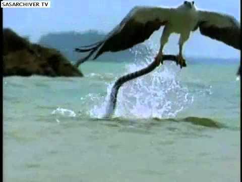 eagle vs snake real