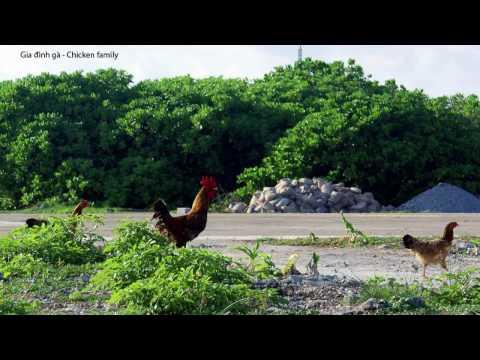 Vàm Cỏ Đông   (Hình ảnh sưu tầm từ Panoramio By Photographers BuiTuanKhiem)