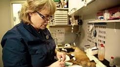 Koiran sterilisaatioleikkaus Animagi Roba