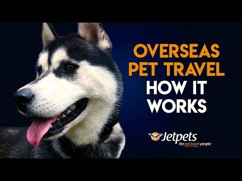 Overseas Pet Travel- How It Works