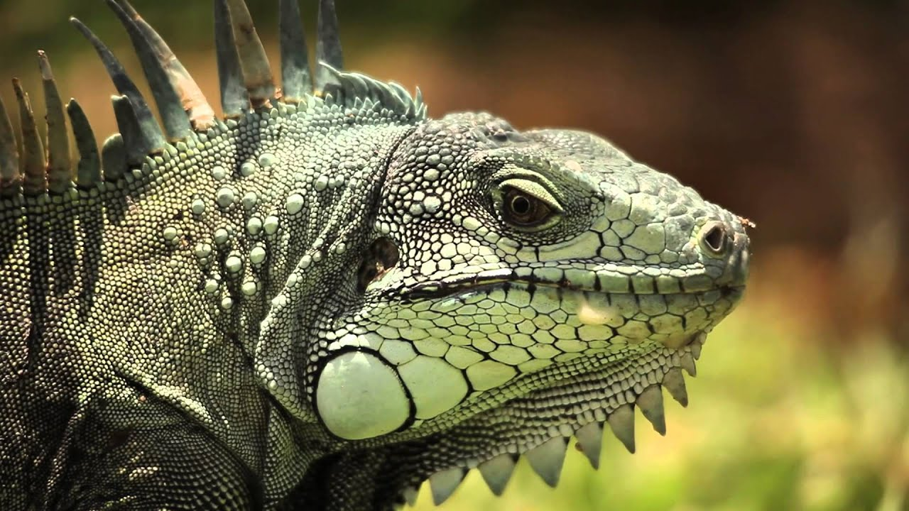 how to make an iguana out of plastic
