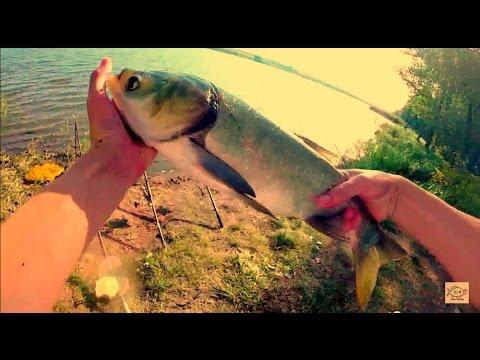 Ловля толстолоба летом на технопланктон.Рыбалка.Fishing - YouTube