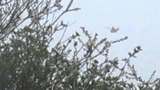 RAF Westland seaking flyby @16:56