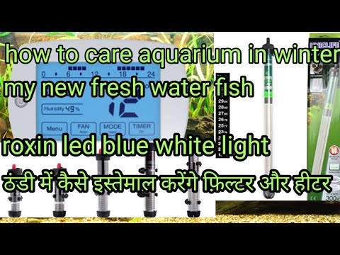 How To Care Aquarium Fish In Winter And My New Fish New Led Light
