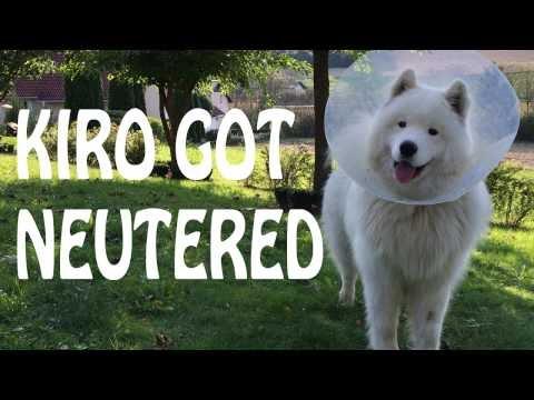 Kiro Got Neutered