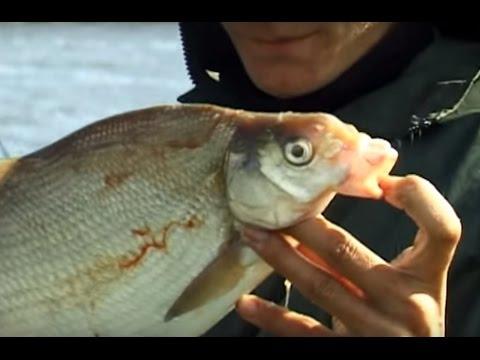 За судаком - на пруд. О рыбалке всерьез. Выпуск 341 HD