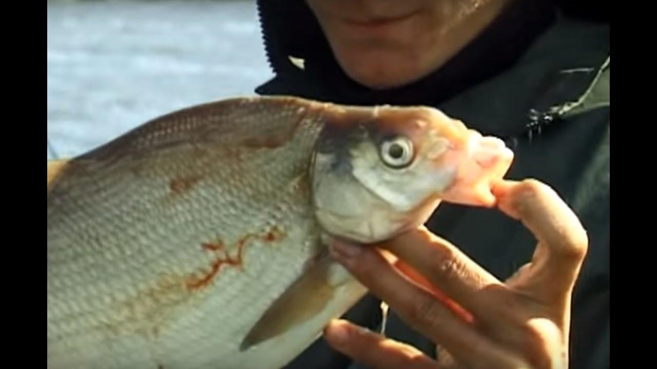 О рыбалке всерьез 2016 все выпуски смотреть онлайн