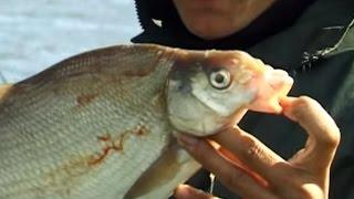Рыбалка с Лодки бортовыми удочками: ловим леща на сало.