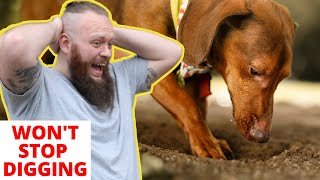 How To STOP Dogs Digging