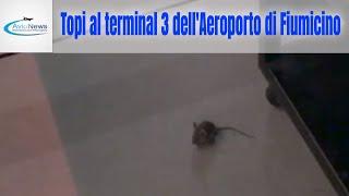 Topi al Terminal 3 dell'Aeroporto di Fiumicino