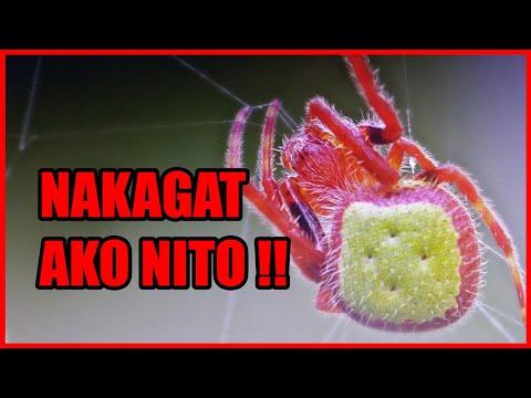 SPIDER Fighting - (Lawa/Kaka)