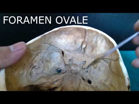 Internal structures of Skull Base, and foramen anatomy simplified!