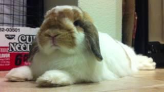 Bunny Staring 2