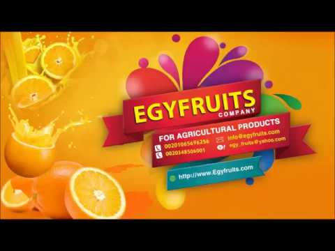 Egyptian Fresh Valencia Orange Egyfruits (Egypt)