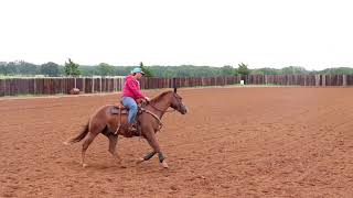 Softness in the Barrel Horse' Face