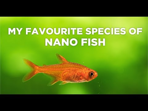 Best FISH For NANO AQUARIUMS - Everything You Should Know
