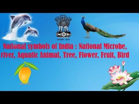 National Symbols Of India : National Microbe, River, Aquatic Animal, Tree, Flower, Fruit, Bird