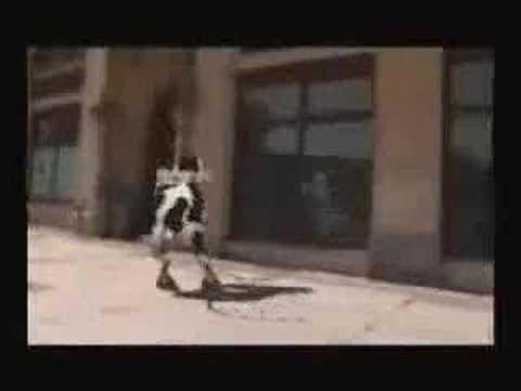 Dans eden inek