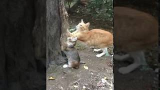 Mother Cat Playing With Kittenand39s - Very Cute Kitten Videos