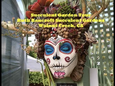 Succulent Garden Tour   Ruth Bancroft Walnut Creek California