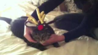 Sam the Cat in a Santa Hat