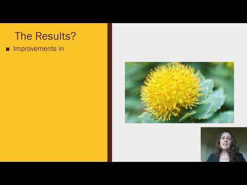 Adaptogenic Herbs -Rhodiola Rosea-Natural Stress Reducing Remedy  By Dr. Lena Edwards