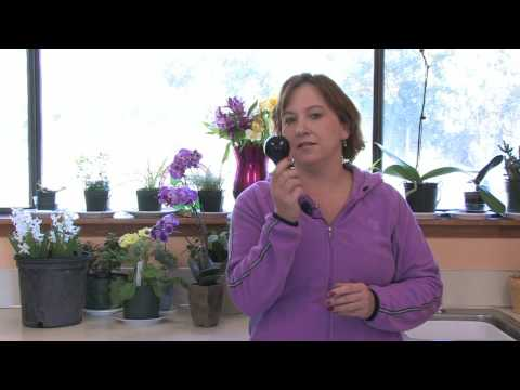 Gardening Tips : How Do Black Lights Affect Plant Growth?