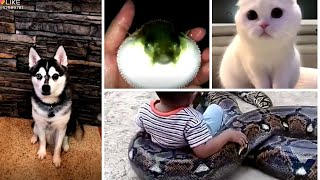 Funny Pets - FUNNY PETS & ANIMALS, SO HILARIOUS (සුරතලුන්ගේ විනෝදේ)