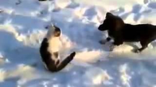 Собака и кошка вместе играют! Собака кошку за шкирку таскает