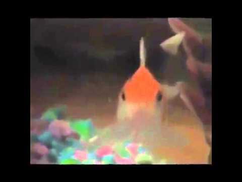 Fish Singing Busta Rhymes