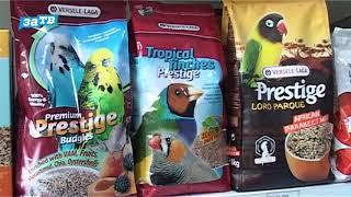 планета ZOO|| Амадины, подробное описание этих птиц.