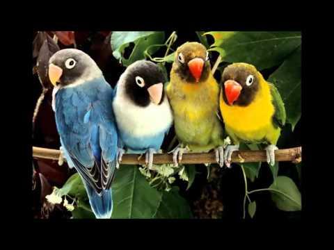 beautiful photo Cyanoramphus parrots
