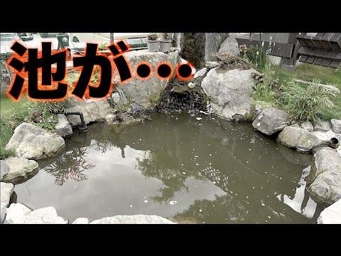 釣りよかハウスの池がこんな事になるなんて・・・。